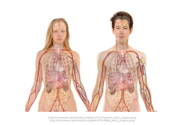 Objawy stłuszczenia wątroby