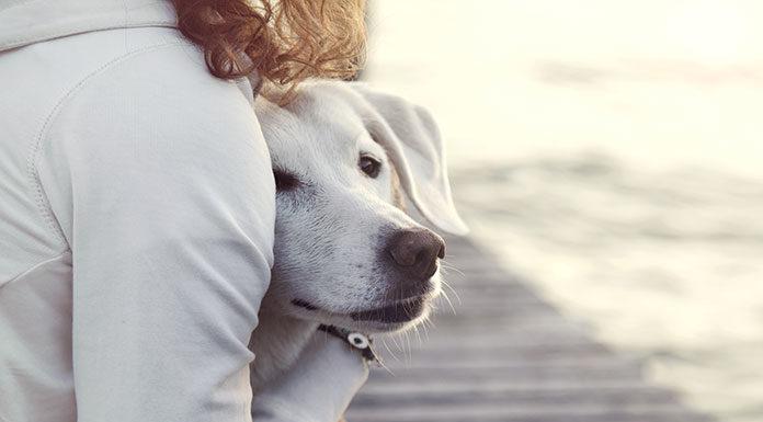 Operacyjne leczenie dyskopatii u psów - poradnik