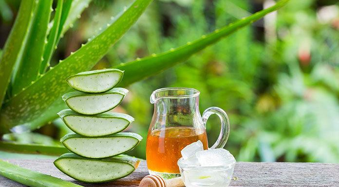 Aloe vera - pełne zdrowie w jednym sukulencie